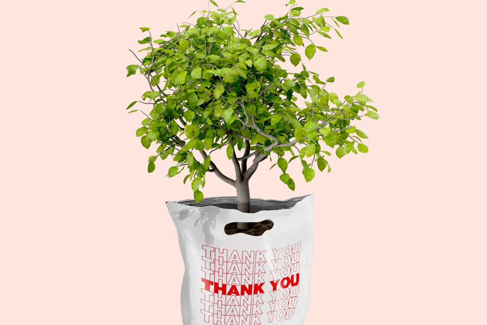 tree planted inside thank you bag