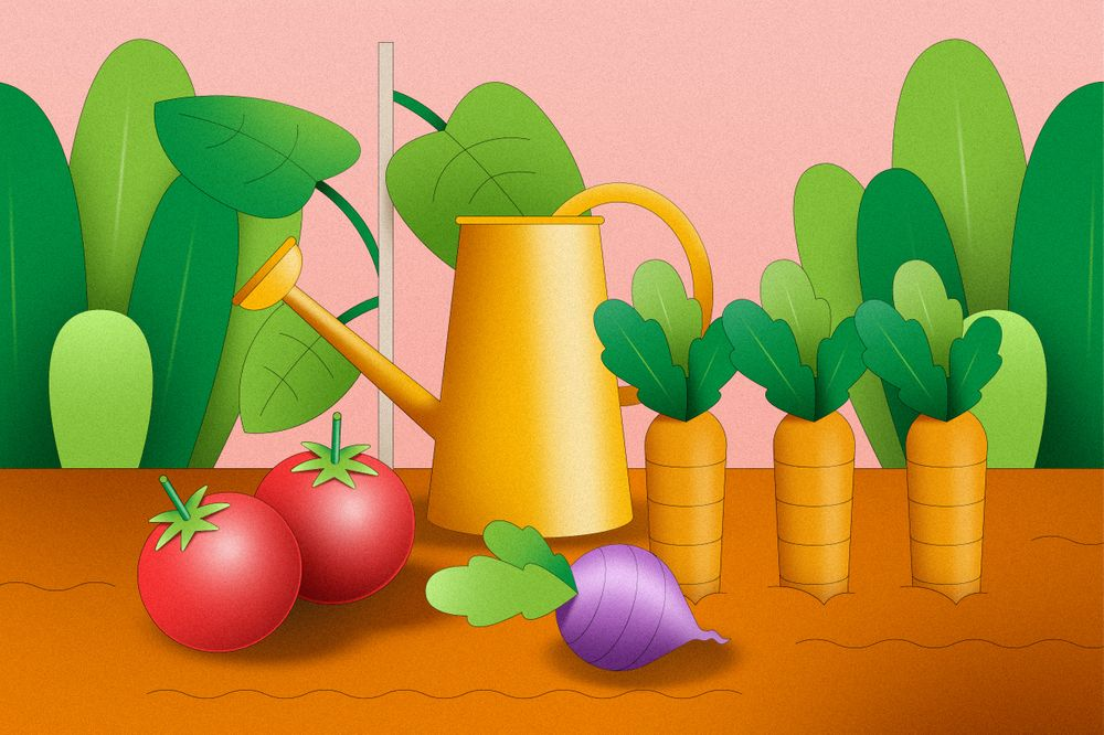 watering can in garden with tomatoes beets carrots