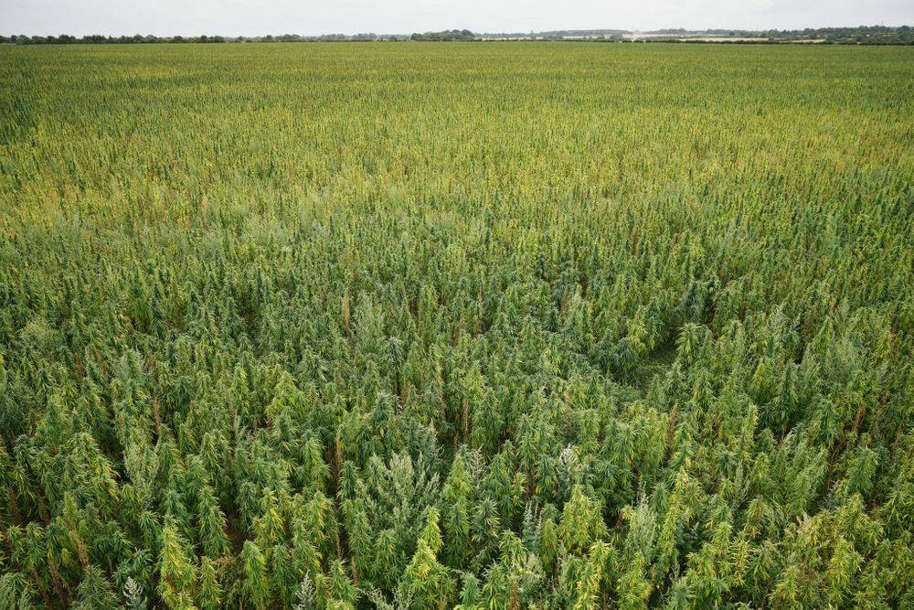 weed farming drones crops