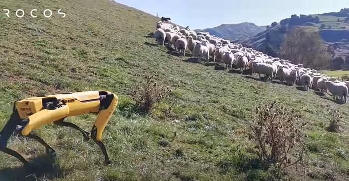 Boston Dynamics shepherd